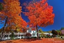 Autumn's Orange Blanket