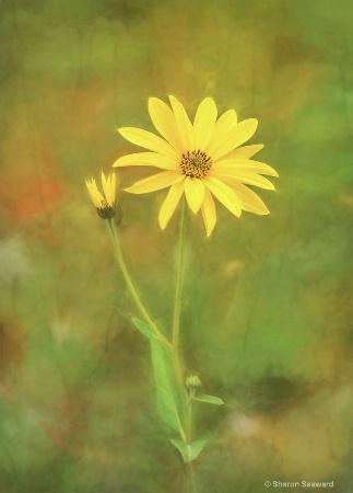 Flower Impressions III