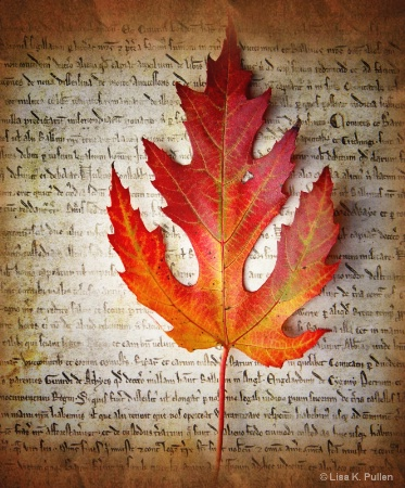 ~Autumn's Declaration~