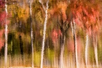Artistic Tree Reflection 11-1-16 012