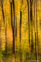 Artistic Forest Swipe 11-1-16 212