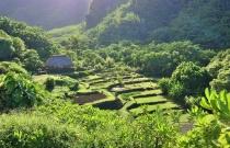 Hawaiian Terraced Garden