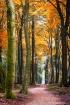 Autumn orange tre...