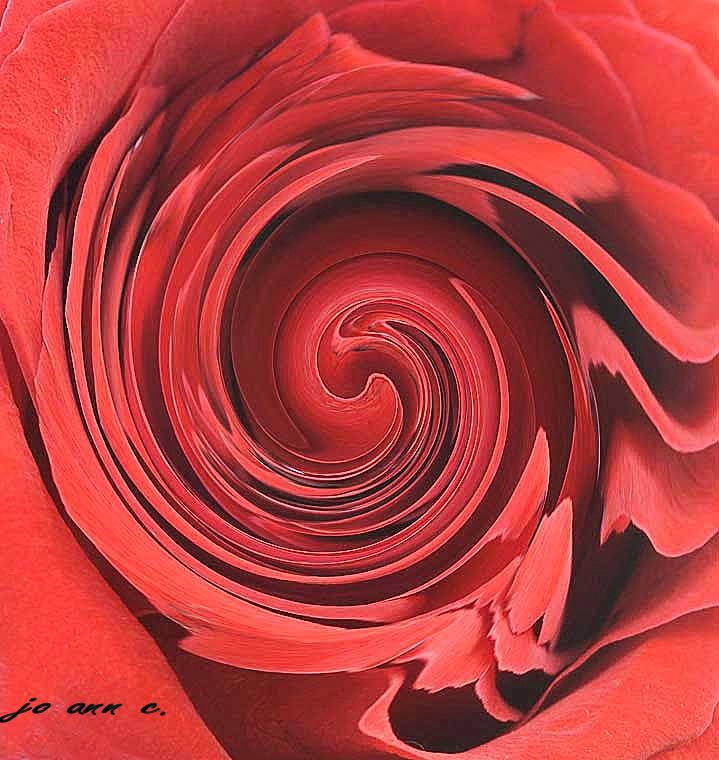 A Spin on a Rose!!