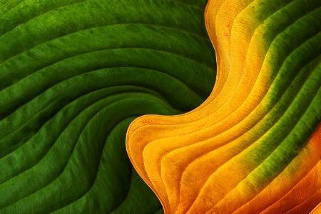 Leaf Twirl