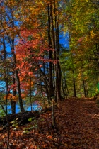 Walking Through Fall