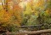 Natural Wooden Br...