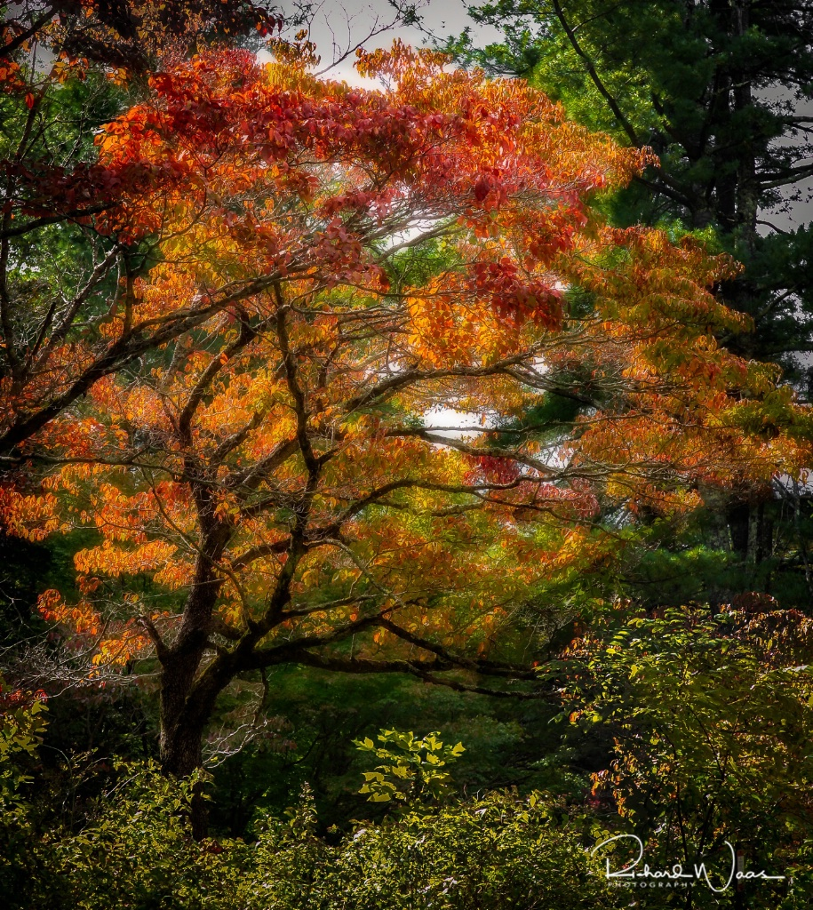 Fall in it's Glory - ID: 15270792 © Richard M. Waas