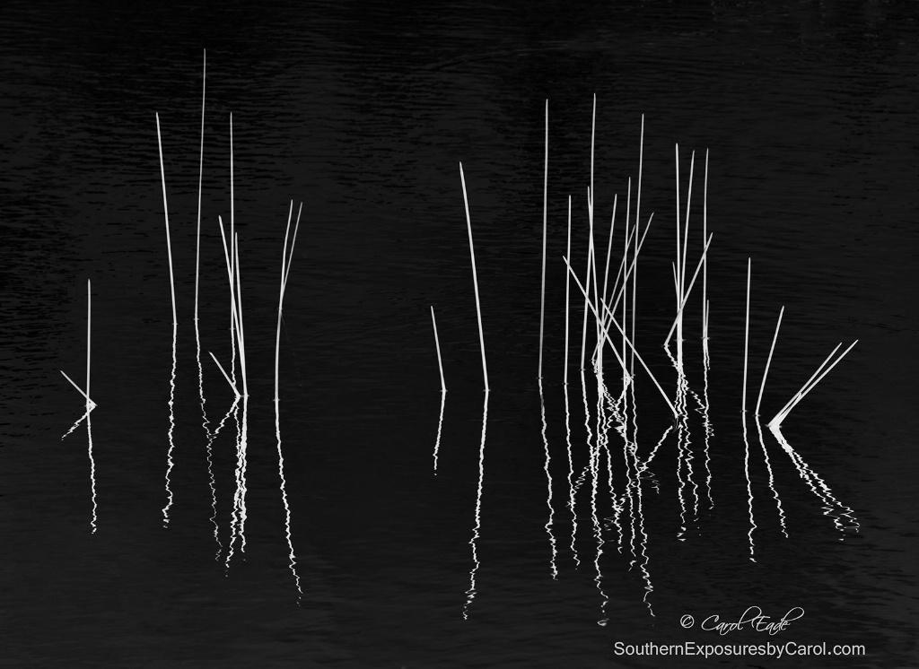 Pond Zen - ID: 15271114 © Carol Eade