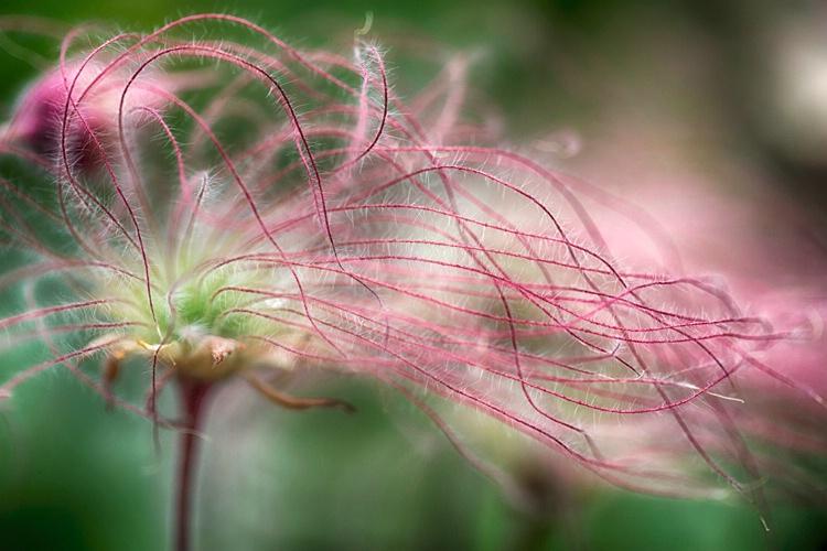 H0C2916 Flower 16 - ID: 15273593 © Raymond E. Reiffenberger