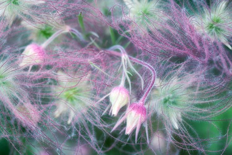 H0C2999 Flower 16 - ID: 15273594 © Raymond E. Reiffenberger