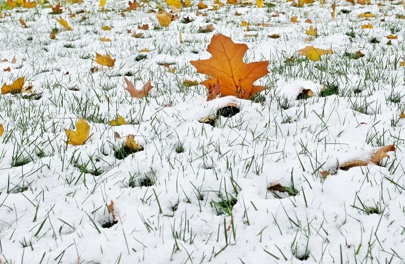 White Coating Of Snow