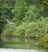 Heron Flying 2