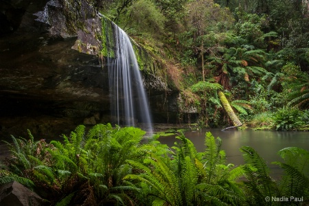 Rainforest Shelter