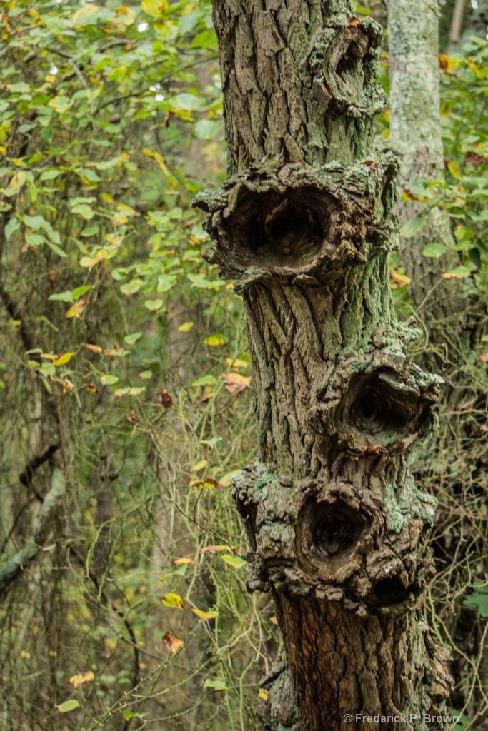 Odd looking Tree-1-1