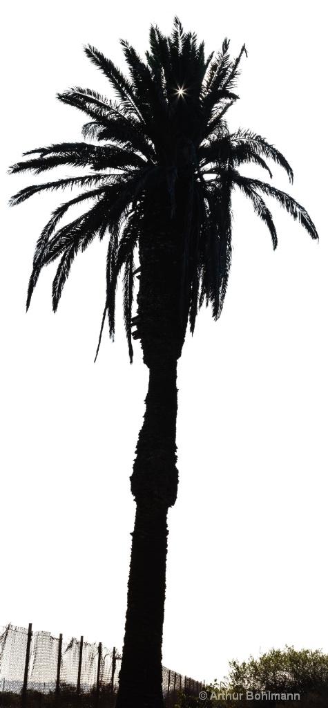 Palm Pano Silhouette
