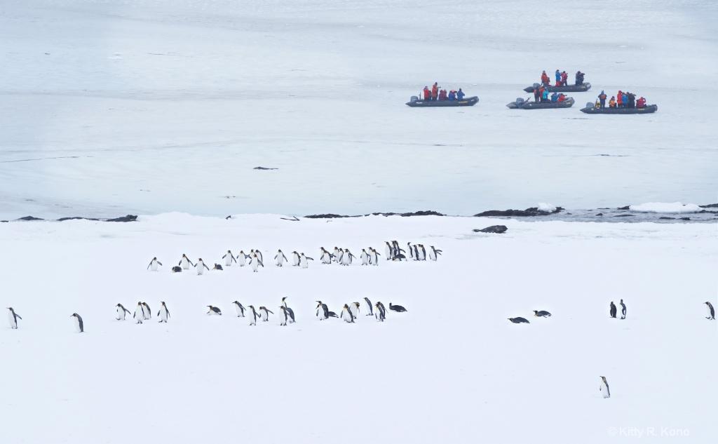 People and Penguins  - ID: 15282050 © Kitty R. Kono