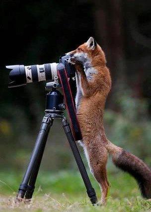 Welcome to foxdenphotos.com