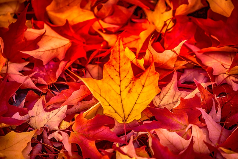 Autumn's Finale - ID: 15288704 © Jeff Robinson