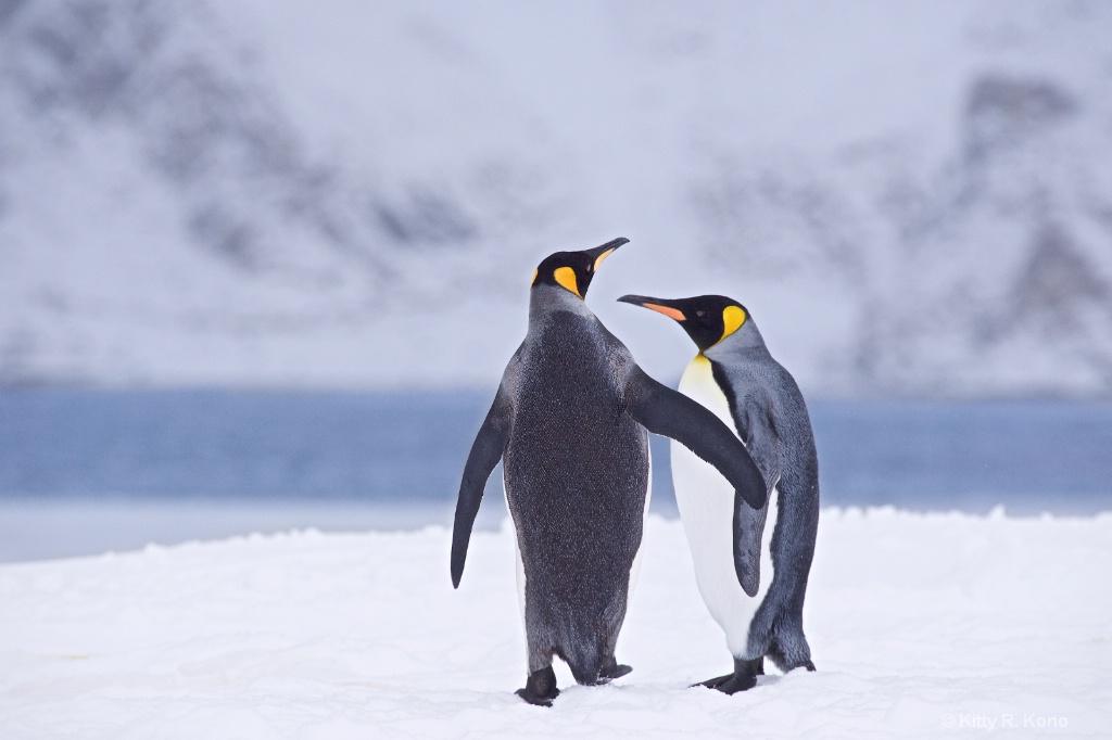 Shall We Dance - ID: 15290008 © Kitty R. Kono
