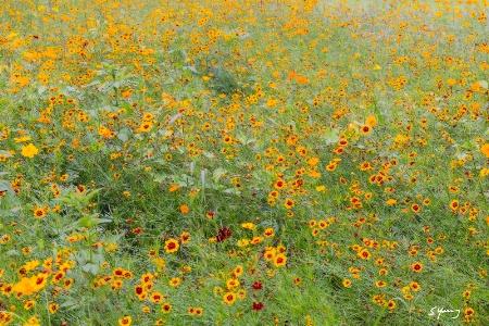Wildflowers; Norfolk Botanical Garden