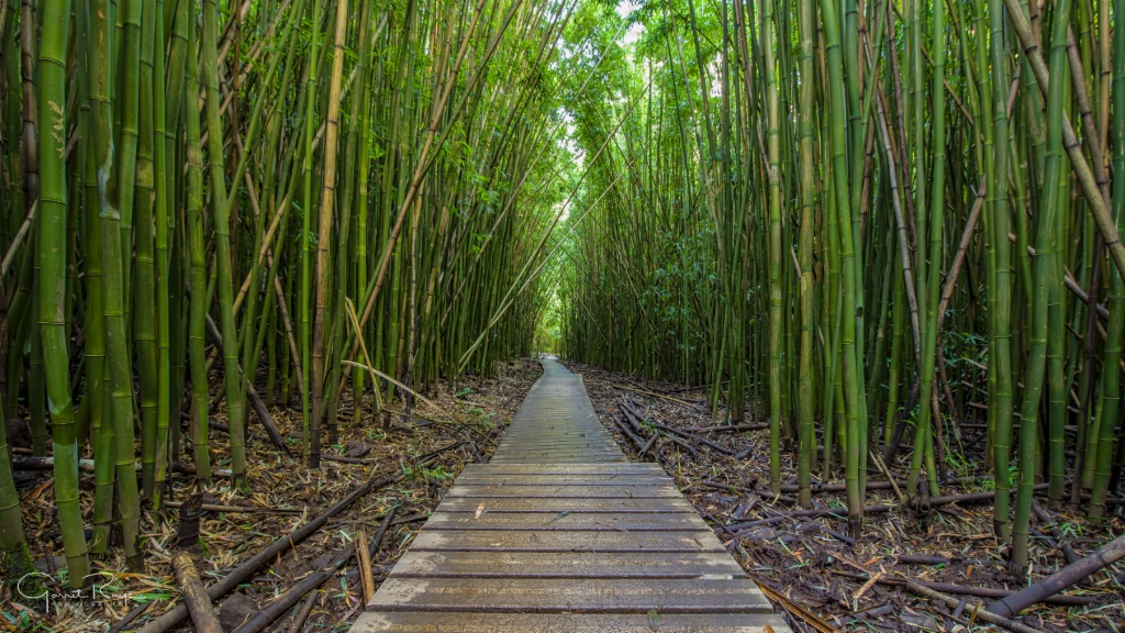 ~Bamboo Path~