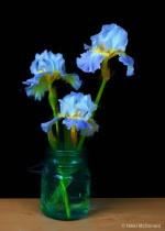 Iris Simply