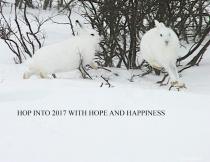 Hop into 2017