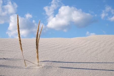Dune Close-Up