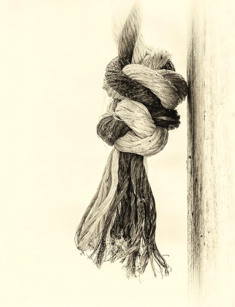 Swing Rope - ID: 15294348 © Thomas L  Willis