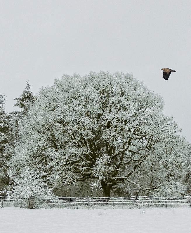 It's Cold Outside - ID: 15295207 © Denny E. Barnes