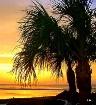 A Taste Of Florid...