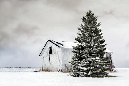 Winter Weary