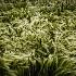 © Pam Bosch PhotoID # 15298992: Wild Grass Meadow