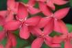 Flowers 4615