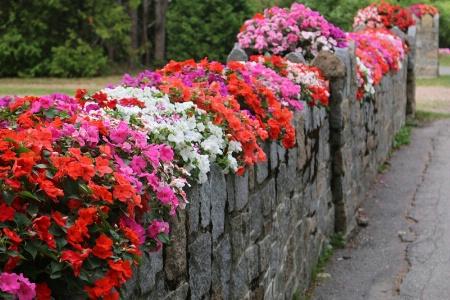 Natural Floral Wall