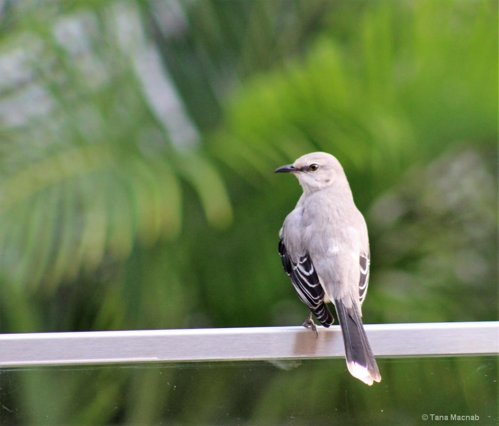 Beautiful Songbird