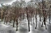 The Strange Winter Forest