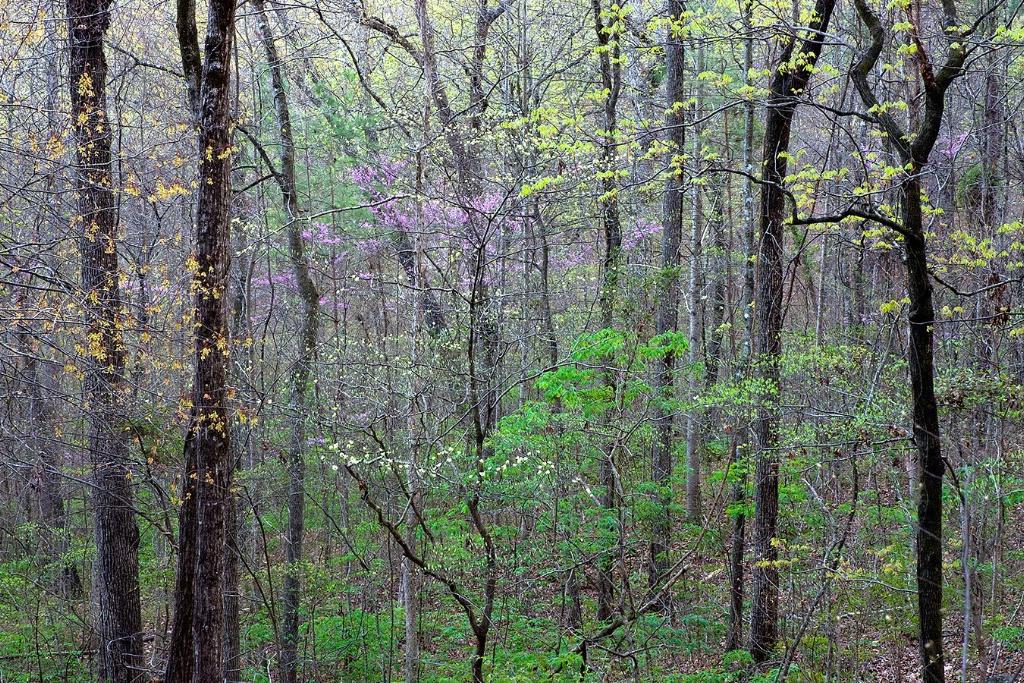 Spring near Palisades - ID: 15304799 © Thomas R. Wilson
