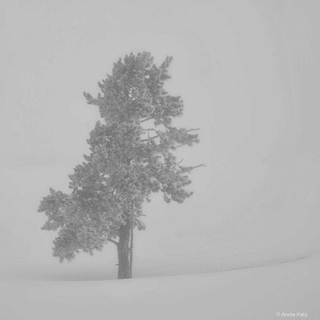 White Out - ID: 15306002 © Annie Katz