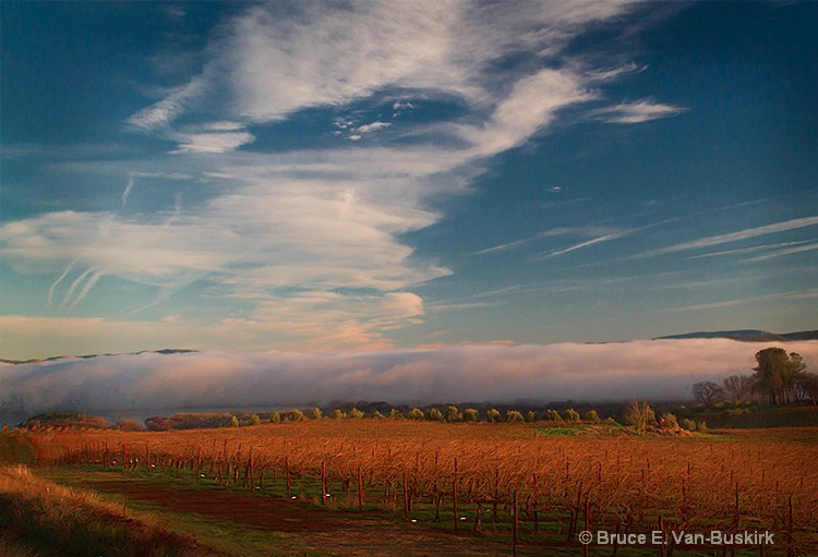 low clouds in the vineyards