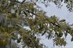 Special tree blos...