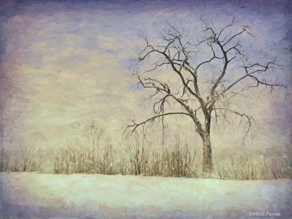 Illinois Solitude