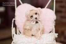 ~~  Millie's Valentine's Day  ~~