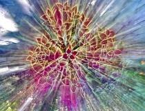Coleus Explosion