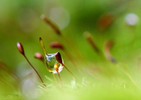 moss droplet