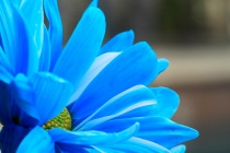 Absorption Blue