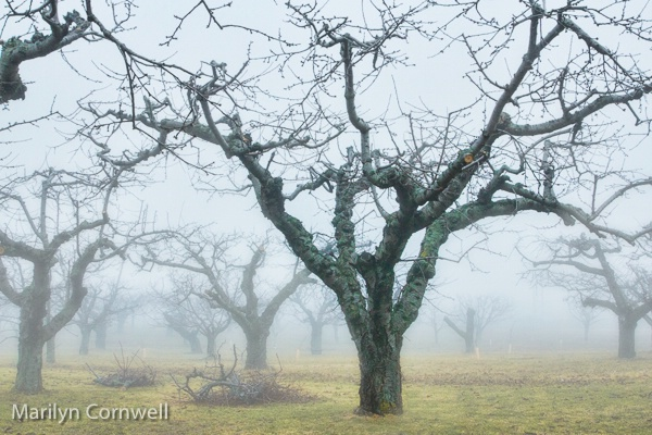 Foggy Day in Niagara - I - ID: 15316441 © Marilyn Cornwell