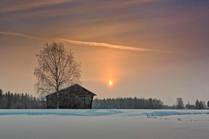 Birch And Barn House Under Winter Sunrise