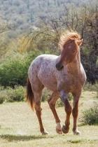 The Super Horse